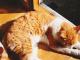 うちの猫: ちび